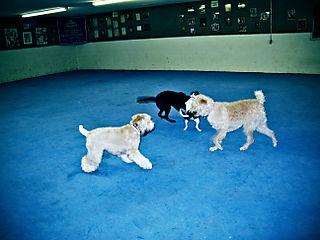 Doggiegarten