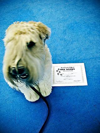 Vera + Diploma