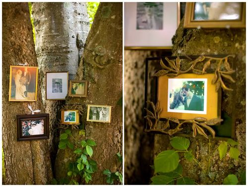 Pics on trees