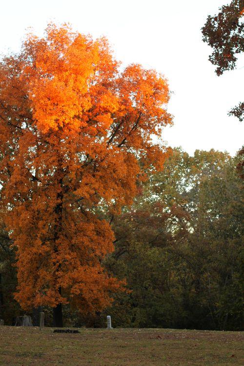 Nov 2012 011
