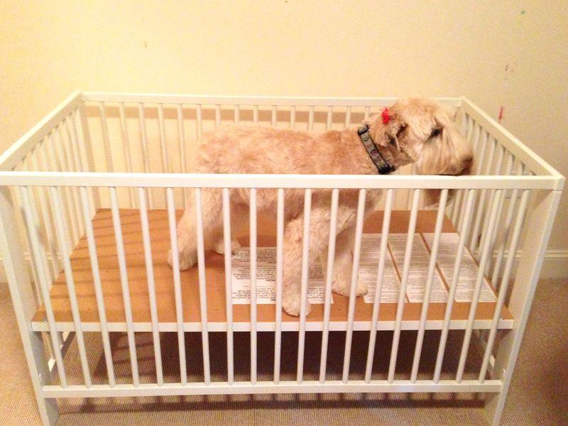 Vera in crib